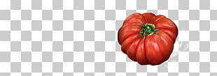 Tomato Bell Pepper Paprika Winter Squash Chili Pepper PNG
