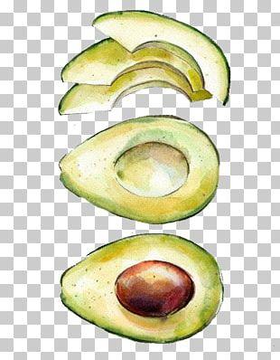 Watercolor Painting Printmaking Drawing Avocado PNG