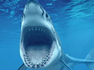 Shark 4K Resolution Ultra-high-definition Television High-definition Video Desktop PNG
