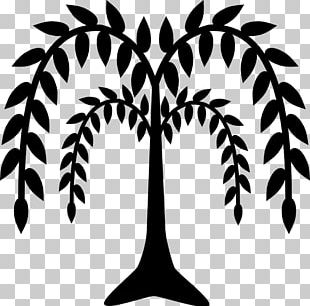 Weeping Willow Tree Drawing PNG