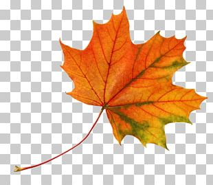 Leaf Autumn Leaves Color PNG