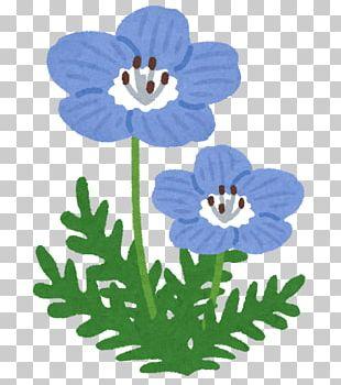 Hitachi Seaside Park Baby Blue Eyes Katsuta Station Petal Flower PNG
