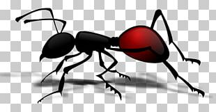 Queen Ant Insect PNG
