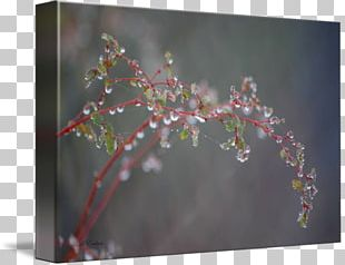 Cherry Blossom Flower Twig Plant PNG