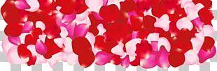 Petal Pink Flowers Rose PNG