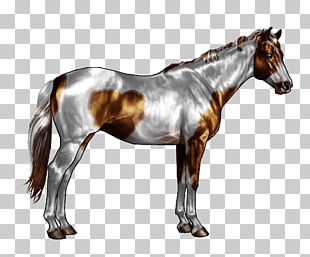 American Paint Horse American Quarter Horse Spotted Saddle Horse Horse Markings Roan PNG
