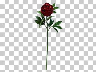 Peony Garden Roses Cut Flowers Artificial Flower PNG