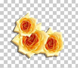 Beach Rose Flower Computer File PNG