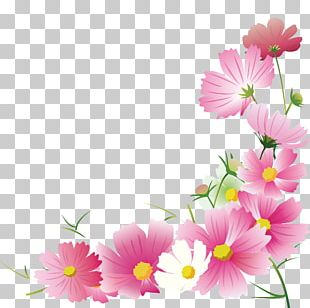 Garden Cosmos Flower Floral Design Illustration Autumn PNG