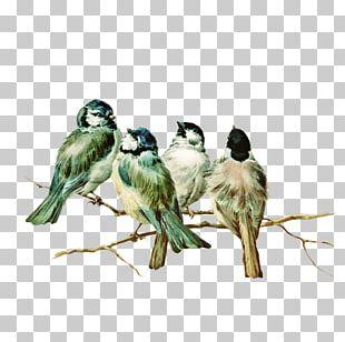 Eastern Bluebird Postcard PNG