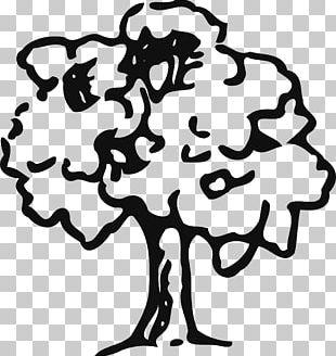Tree Oak Drawing PNG