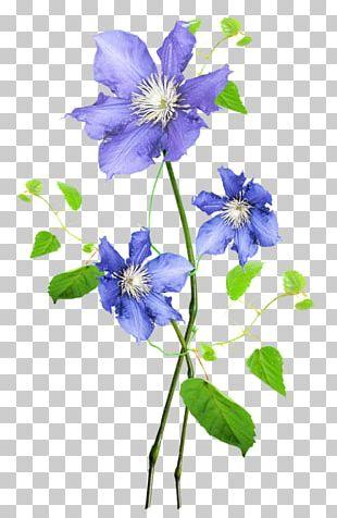 Flower Floral Design Watercolor Painting Botanical Illustration PNG