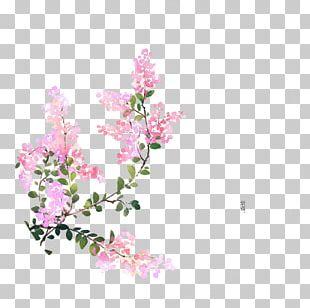 Flower U8a69u8a5eu6b4cu8ce6 Illustrator Illustration PNG