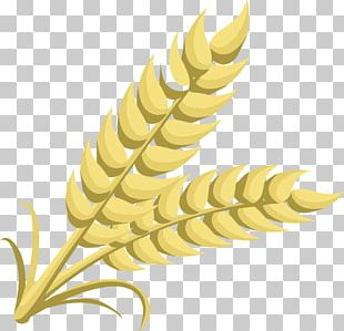 Grain Cereal Wheat PNG