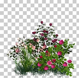 Flower Garden Rose Garden PNG
