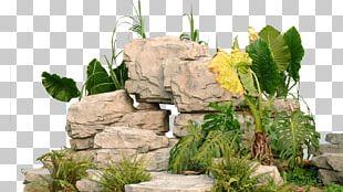 Garden Landscape Park PNG