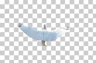 Feather Seabird Beak Water Bird PNG