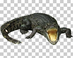 Nile Crocodile Gharial Chinese Alligator PNG