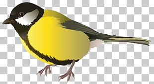 Bird Finch Parrot Sparrow PNG
