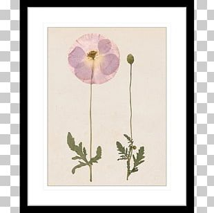 Floral Design Flower Frames PNG