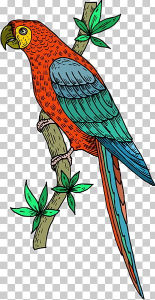 Bird Cockatoo Scarlet Macaw PNG