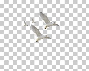 Flying Bird Image Png
