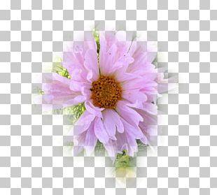Garden Cosmos Chrysanthemum Transvaal Daisy Cut Flowers Petal PNG