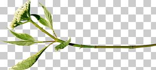 Twig Plant Stem Leaf Tree Flower PNG