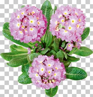 Cut Flowers Lilium PNG