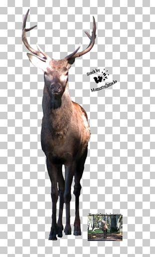 Elk Reindeer PNG