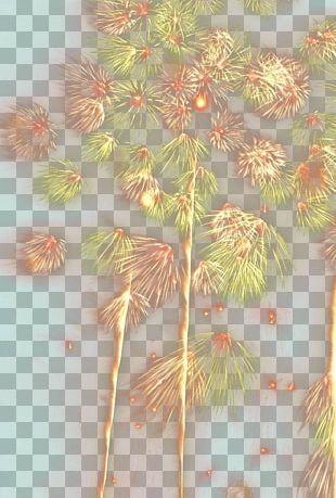Petal Floral Design Leaf Pattern PNG