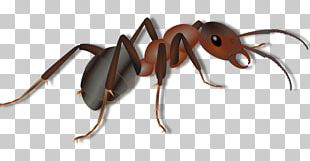 Red Imported Fire Ant Insect PNG