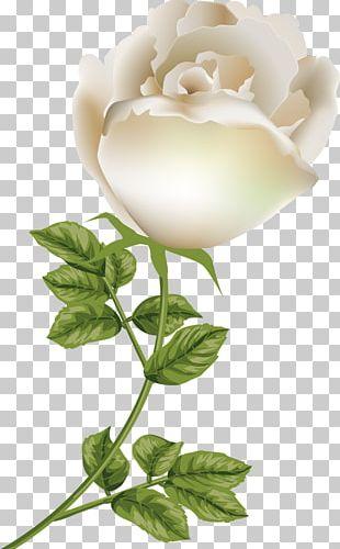 Garden Roses Gardenia Floral Design Cut Flowers PNG