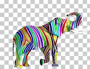 Elephant Rainbow Illustration PNG
