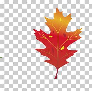 Maple Leaf Graphics Autumn Leaf Color PNG