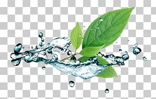 Water Stock Photography Leaf PNG