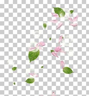 Petal Flower Pink PNG