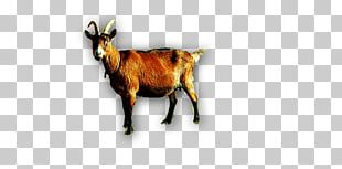 Goat Sheep Cattle Horn PNG