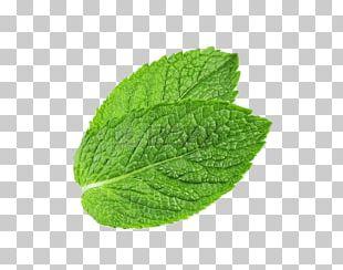 Peppermint Mentha Spicata Water Mint Leaf PNG