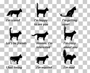 Cat Communication Kitten Tail Wagging By Dogs PNG