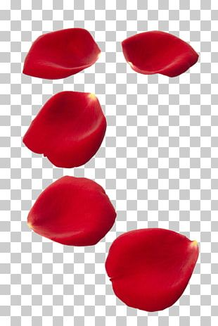 Rose Petal Stock Photography Flower PNG