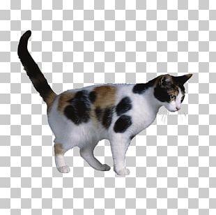 Calico Cat X Chromosome Cat Coat Genetics X-inactivation PNG