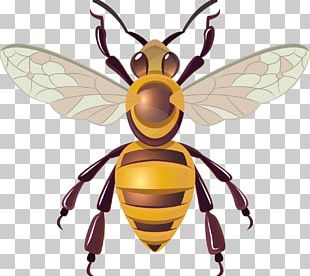 Honey Bee Hornet Insect PNG