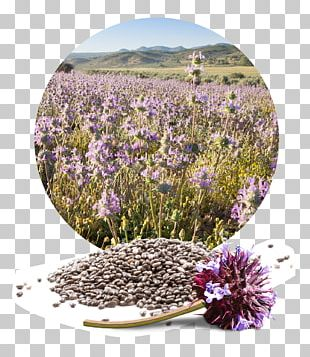 Chia Seed English Lavender Flower PNG