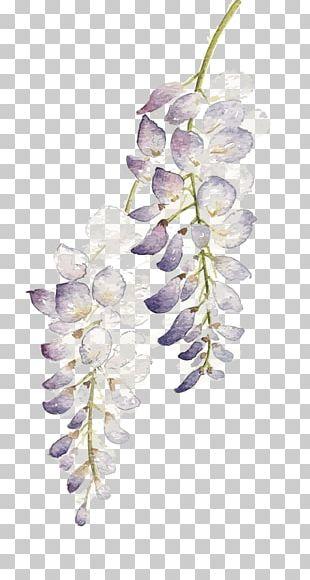Flower Watercolor Painting Wisteria Floribunda PNG