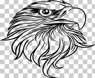 Bald Eagle Black-and-white Hawk-eagle Drawing PNG