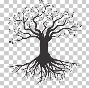 Tree Root Silhouette Drawing PNG