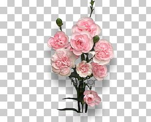 Cut Flowers Turflor Floral Design Garden Roses PNG