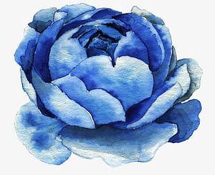 Blue Watercolor Flowers PNG