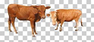 Cattle Water Buffalo PNG